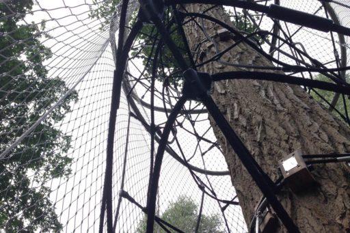 boomkroontoren-amsterdam-netten-rondom-boom3